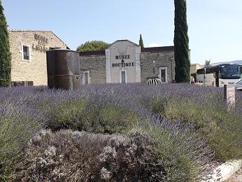 Levendula Múzeum